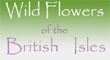 Wild flowers of the British Isles
